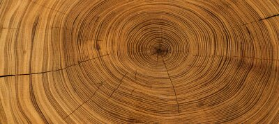 Fototapeta Old wooden oak tree cut surface. Detailed warm dark brown and orange tones of a felled tree trunk or stump. Rough organic texture of tree rings with close up of end grain.