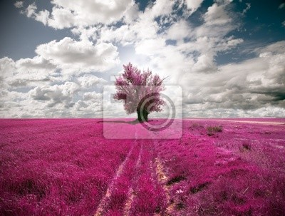 Fototapeta Oniric krajobraz i drzewa