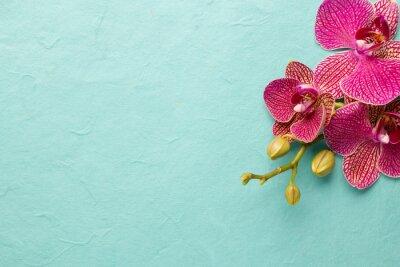 Fototapeta Orchid.