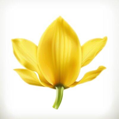 Fototapeta Orchid kwiat, ikona wektor