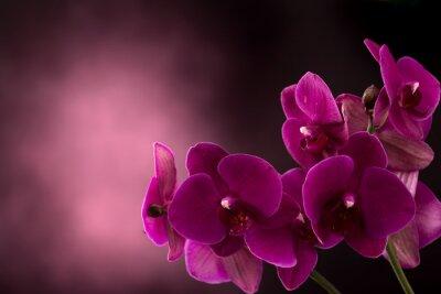 Fototapeta Orchid w ciemnym tle nieostry
