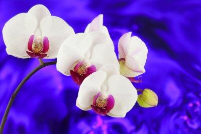 Fototapeta Orchid z niebieskim i fioletowym tle wody