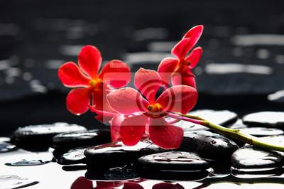 Orchidea czerwona gałąź z czarnymi kamieniami na mokrych kamyczkach