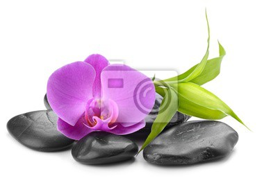 orchidea i bambusa na zen bazalt kamienie na białym tle