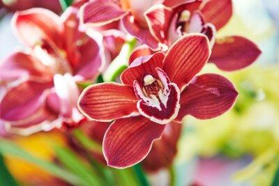 Fototapeta orchidea pączek
