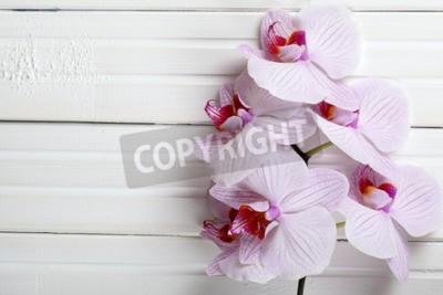 Fototapeta Orchidea tle