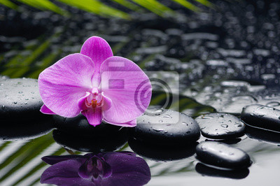 orchidea z kamieni i liścia na mokrych tle