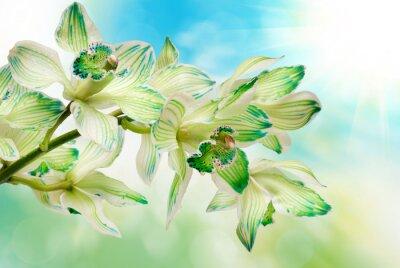 Fototapeta orchidflower