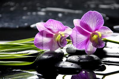 Oriental spa z orchidei i roślin zielonych z zen kamienie na