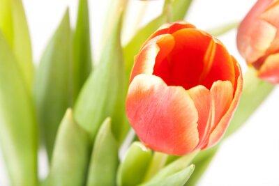 Fototapeta Pączek czerwone i żółte tulipany w bukiet