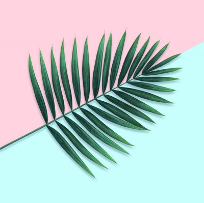 Palm branch on pink and blue background. Watercolor illustration.