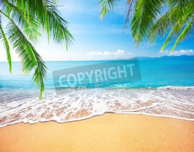 Fototapeta Palm i tropikalnej plaży
