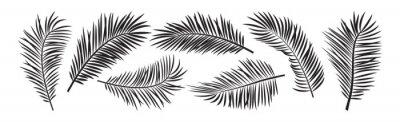 Fototapeta Palm leaf vector, black summer branch plant jungle, nature set icon isolated on white background. Tropic illustration