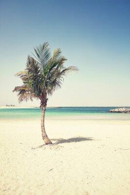 Fototapeta Palm na pustej pla? Y, stosowany cross przetwarzania