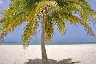 Fototapeta Palm na wyspie Passion w pobliżu Cozumel w Meksyku