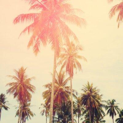 Fototapeta Palm Trees Dżungli Stonowanych Krajobraz Tropical View