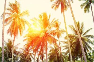 Fototapeta Palm Trees Dżungli Stonowanych Tropical Holiday View