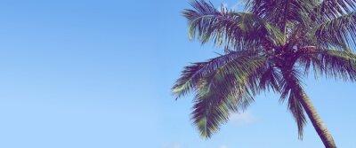 Fototapeta Palma drzewa tle niebieskiego nieba