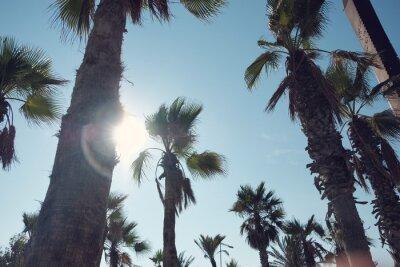 palma i błękitne niebo