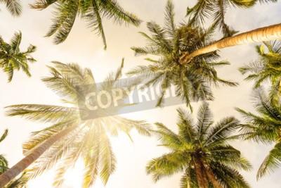 Fototapeta Palma kokosowego perspektywy widoku