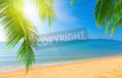 Fototapeta Palma liści i tropikalnej plaży