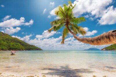 Fototapeta Palma na tropikalnej plaży. Moda podróży i koncepcji plaży tropikalnych.