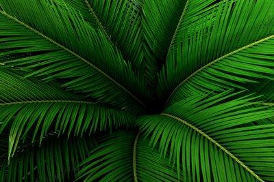 Fototapeta Palma pozostawia zielony wzór, abstrakcyjne tropikalne tło.