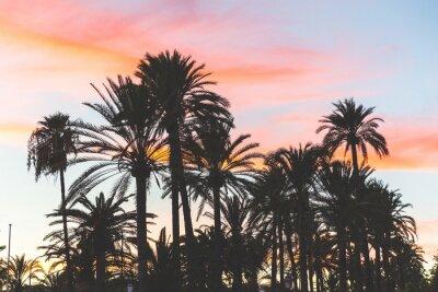 Fototapeta Palma sylwetka o zachodzie słońca na Majorce