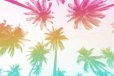 Fototapeta Palma sylwetka z kolorowym filtrem na tle latem.