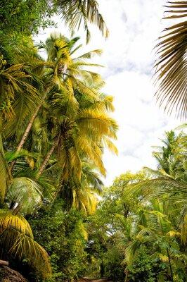 Fototapeta Palmy i drzewa z zielonymi liśćmi w lesie deszczowym