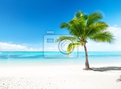 Fototapeta palmy i morze