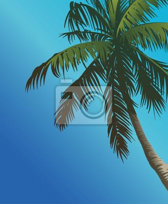 palmy i niebo