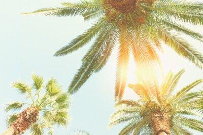Fototapeta palmy i słońce