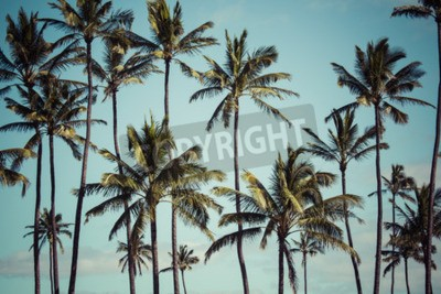 Fototapeta Palmy kokosowe na Hawajach, USA.