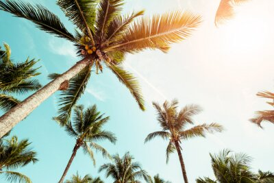Fototapeta Palmy kokosowe na plaży z promieni słonecznych w lecie - odcień koloru rocznika.