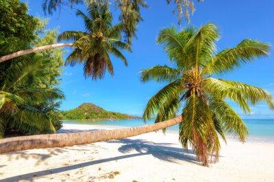 Fototapeta Palmy na plaży na wyspie Praslin, Seszele. Moda koncepcji podróży i tropikalnych plaży.