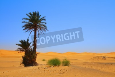 Fototapeta palmy na Saharze