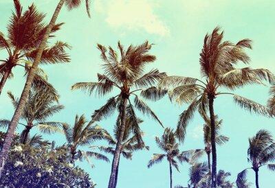 Fototapeta palmy, rocznika efekt