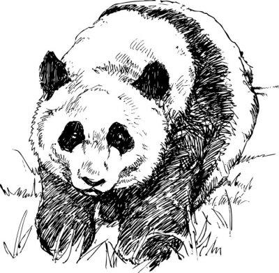 Fototapeta Panda rysowane ręcznie