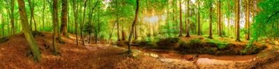 Fototapeta Panorama idylliczny las z strumykiem przy wschodem słońca