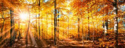 Fototapeta Panorama lasów w złotej jesieni