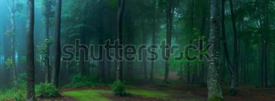 Fototapeta Panorama mglisty las. Bajki strasznie wyglądające lasy w mglisty dzień. Zimny mglisty poranek w lesie grozy