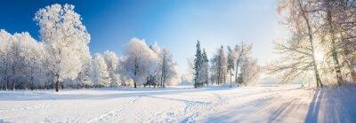 Fototapeta Panorama of beautiful winter park