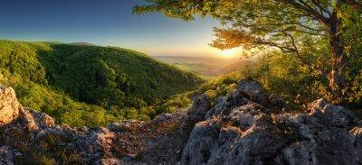 Fototapeta Panorama of spring with sun and tree, Slovakia