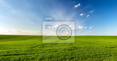 Fototapeta panorama pejzaż wiosna, zielone pole pszenicy