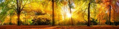 Fototapeta Panorama von einem Herrlich schönen Wald im Herbst bei goldenem Sonnenschein
