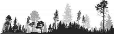 Fototapeta panorama wysokiej szarej jodły las na białym tle