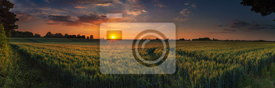 Fototapeta Panoramic sunset over a ripening wheat field