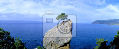 Fototapeta Panoramic view of a lonely tree growing on a rock. Crimea