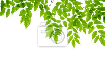 panoramiczne zielone liście na białym tle